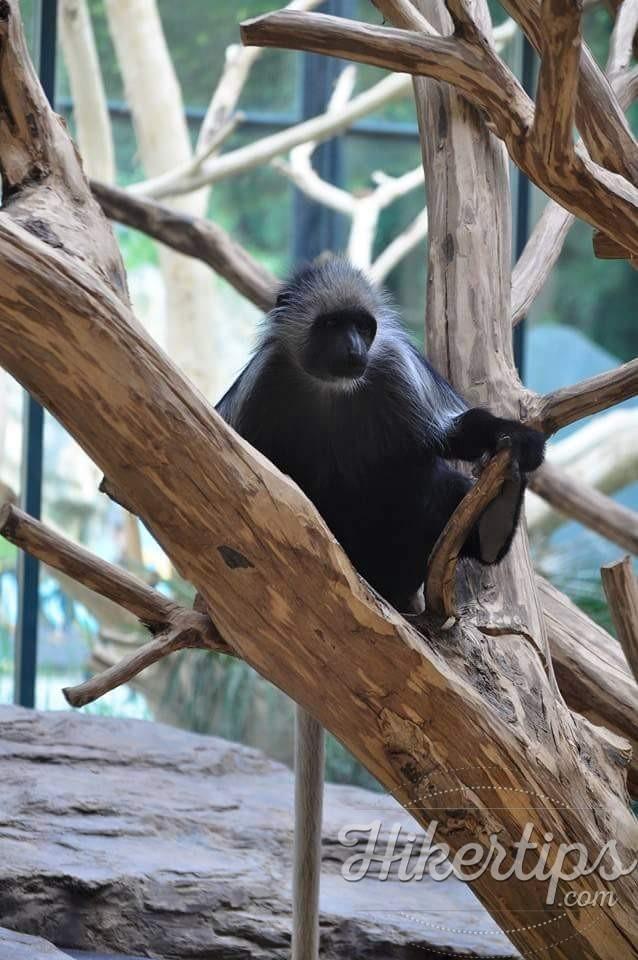 Schonbrunn Zoo