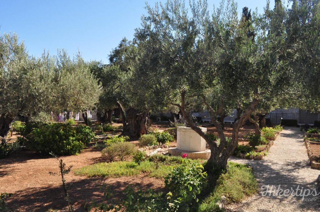 The Garden of Gethsemane