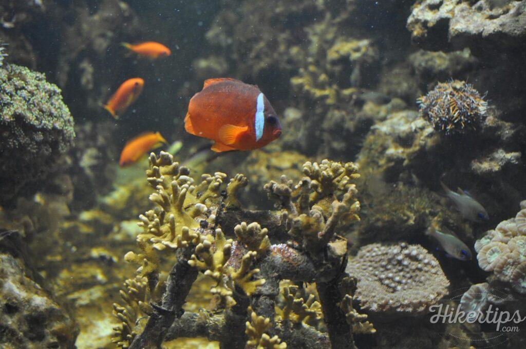 Sea Life Munich