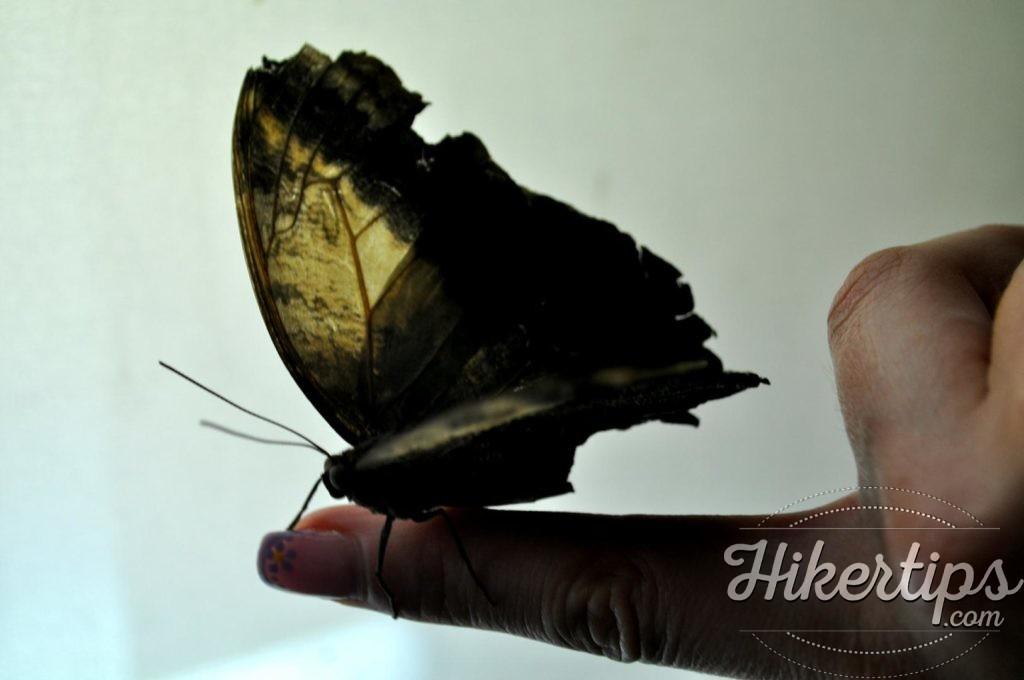 Alive Butterflies
