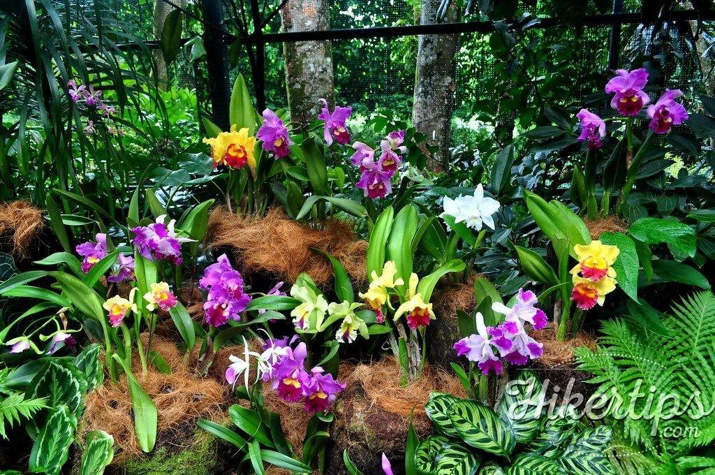 The Botanical Garden,Singapore